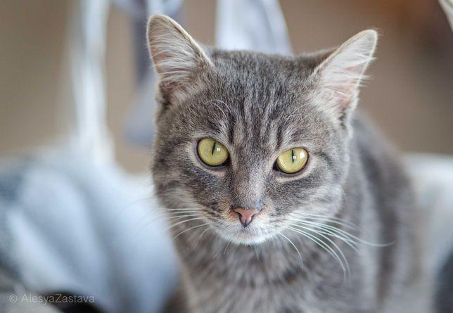 Ксавье - обаятельный кот-хулиган к вашим услугам бесплатно