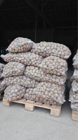 Ziemniaki Vineta kal 3-5