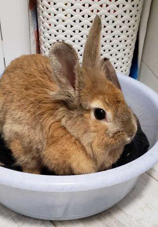 Найден кролик Харьков