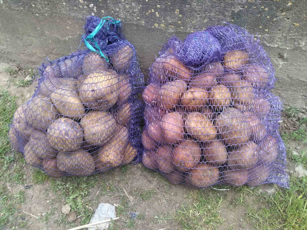 Продам картоплю біла роса