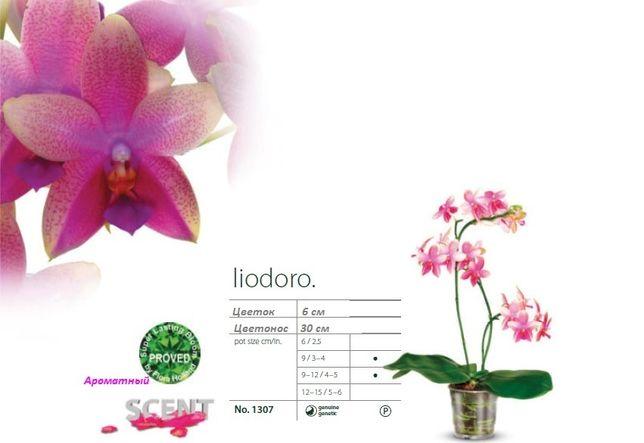 Орхидея Лиодоро подросток