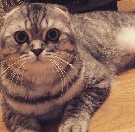 Пропал кот , просьба вернуть за вознаграждение