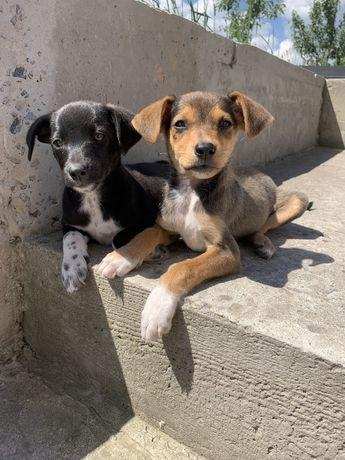 Подарую щенят/ собака / цуцик / пес