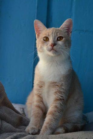 світло-руденька кішечка з янтраними очима 7м