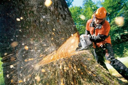 Wycinka drzew, prześwietlenie, cięcia techniczne, prace w ogrodzie