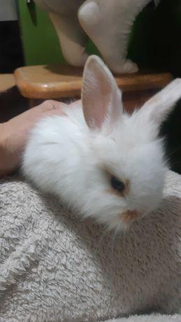 Кролики, маленькі., декоративні