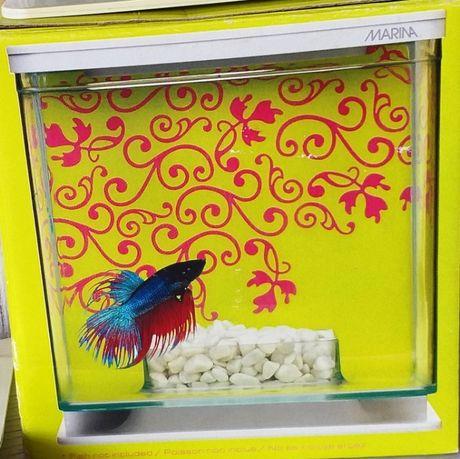 Małe akwarium dla rybki Marina
