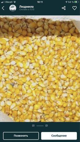 Кукурудза , пшениця , ячмінь 2021 року