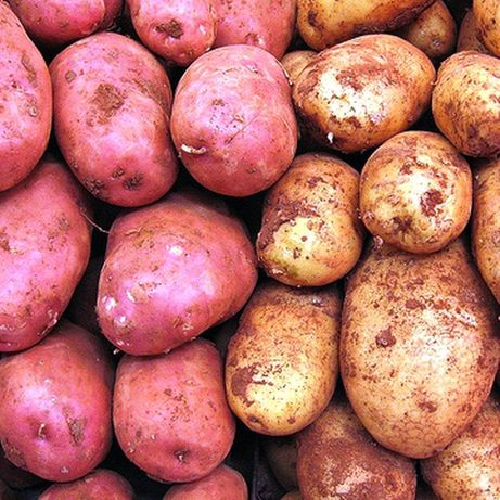 Vendo batatas novas, vermelhas e brancas