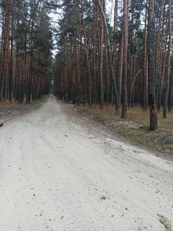 Продам участок в сосновом лесу Черкасские Тишки ss