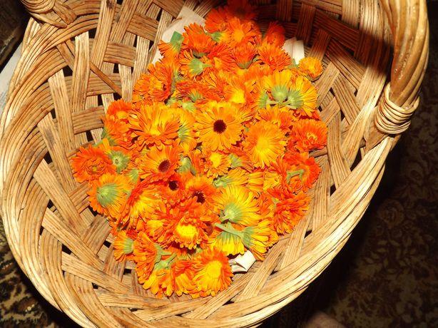 Сушені квіти календули