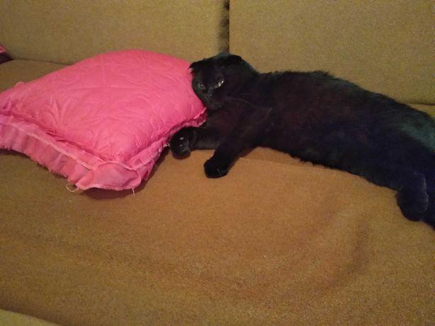 Животные вязка котов