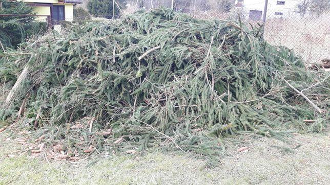 Oddam gałęzie świerkowe - okolo 2 m3