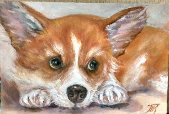 картина маслом холст 20х30 портрет собаки корги, собачка, щенок.