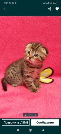Кошечка окраса табби.