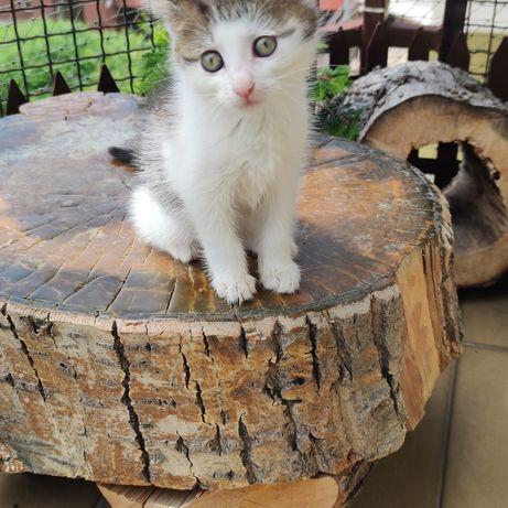 Kociak do adopcji