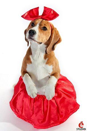 Юбочка + бант костюм для собаки