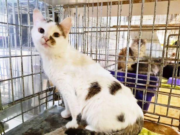 Обаятельной Джоли очень плохо в клетке | белая кошка, кошечка 1 год