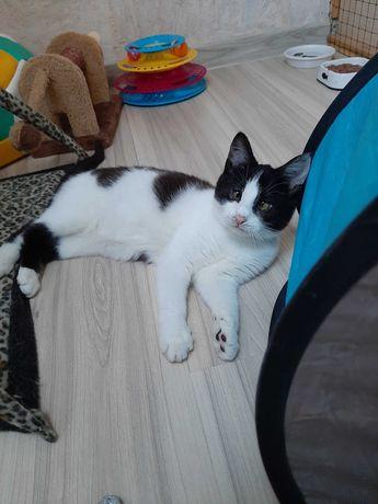 Mako młoda kocia panienka do adopcji