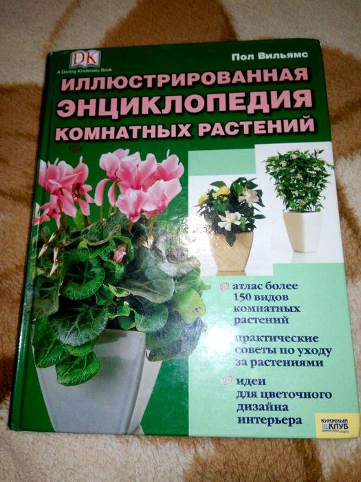 Энциклопедия комнатных растений Александрия - изображение 1