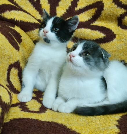 Кошенята від висловушки ))