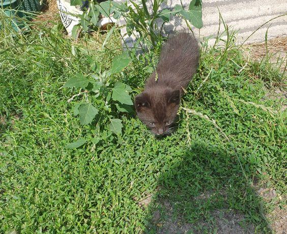 Milusie koteczki do oddania/ został czarny