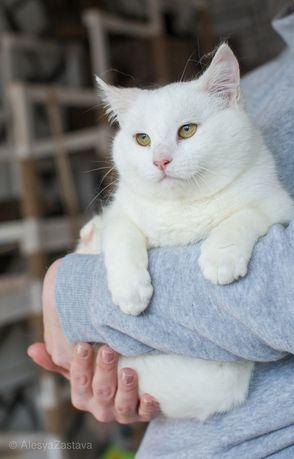 Фета, 6 мес, кошечка, кошка, красивая кошка