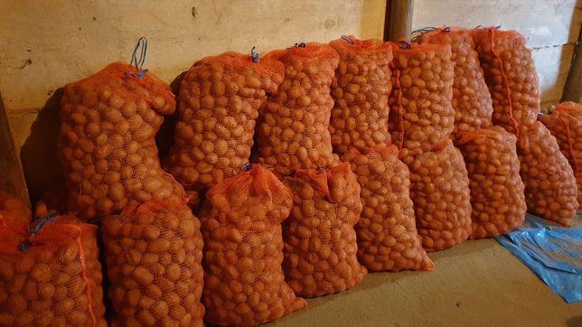 Ziemniaki  sadzeniak jadalne