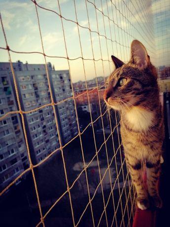 Siatka na ptaki, siatka na balkon, siatka dla kota, gołębie, kolce