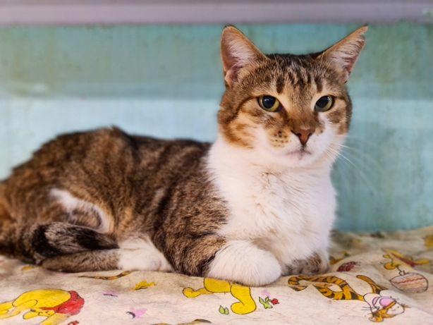 Скромную кошечку Вивьен не замечают в приюте | кошка, котенок 1 год