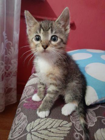 Śliczna mała koteczka