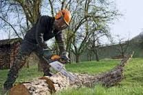 Зрізка,спил дерев.Розчистка та обрізка сада та ділянок.Прізка дров