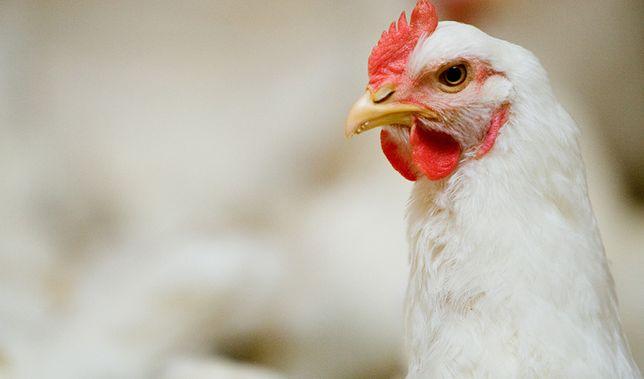 Kurczak prosto od hodowcy !