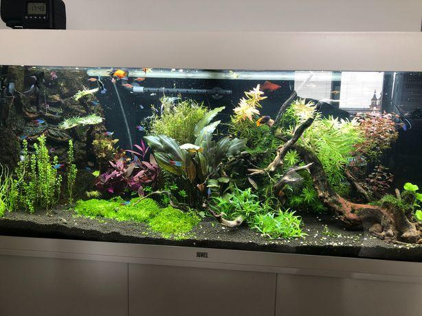 Akwarium Juwel rio 240