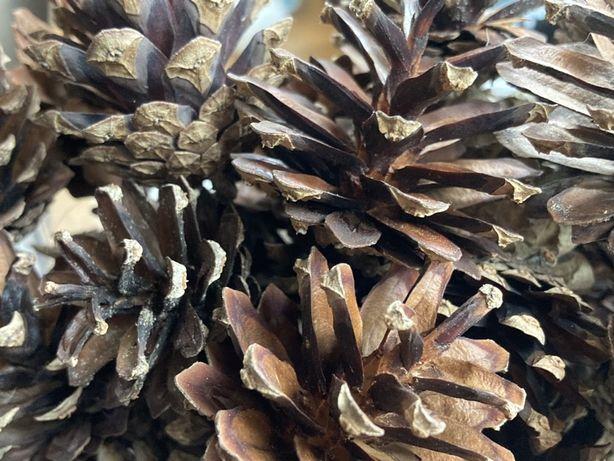 Szyszki sosnowe dekoracja ozdoba  swiateczna 100 sztuk