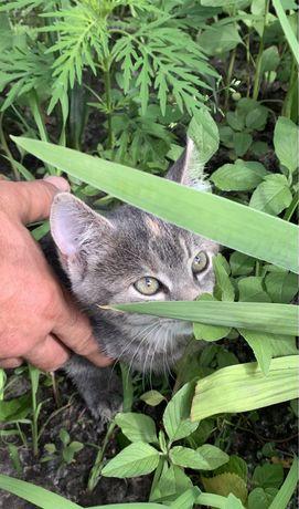 Отдам в добрые руки котенка-девочку крысолова