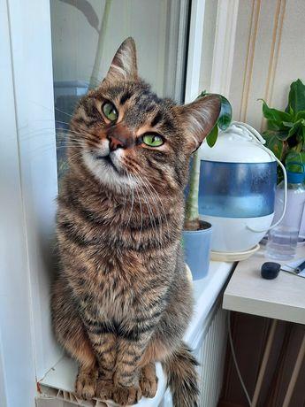 Кошка Исида (или просто Иса) ищет дом!