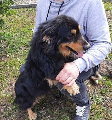 Prezes- oddam psa w dobre rece- pies szuka domu