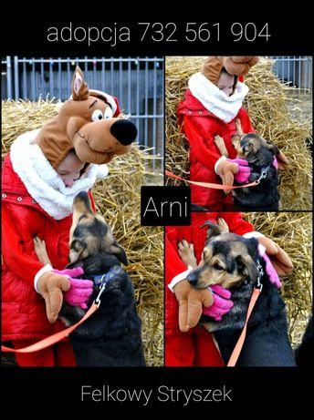 Pies samiec adopcja za darmo do dobrego domu nie do kojca
