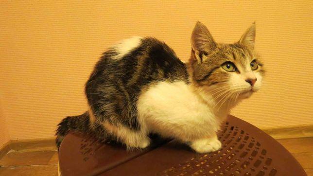 Милый кот ищет семью!)