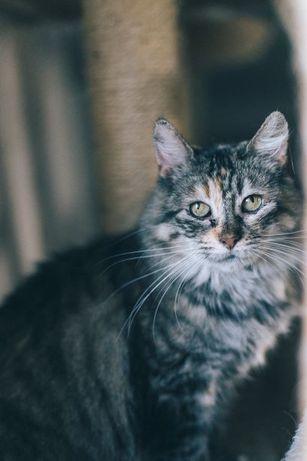 Syberia -kotka syberyjska w typie rasy z FIV+ szuka domu