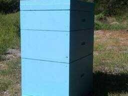 вулики дадани з бджолами