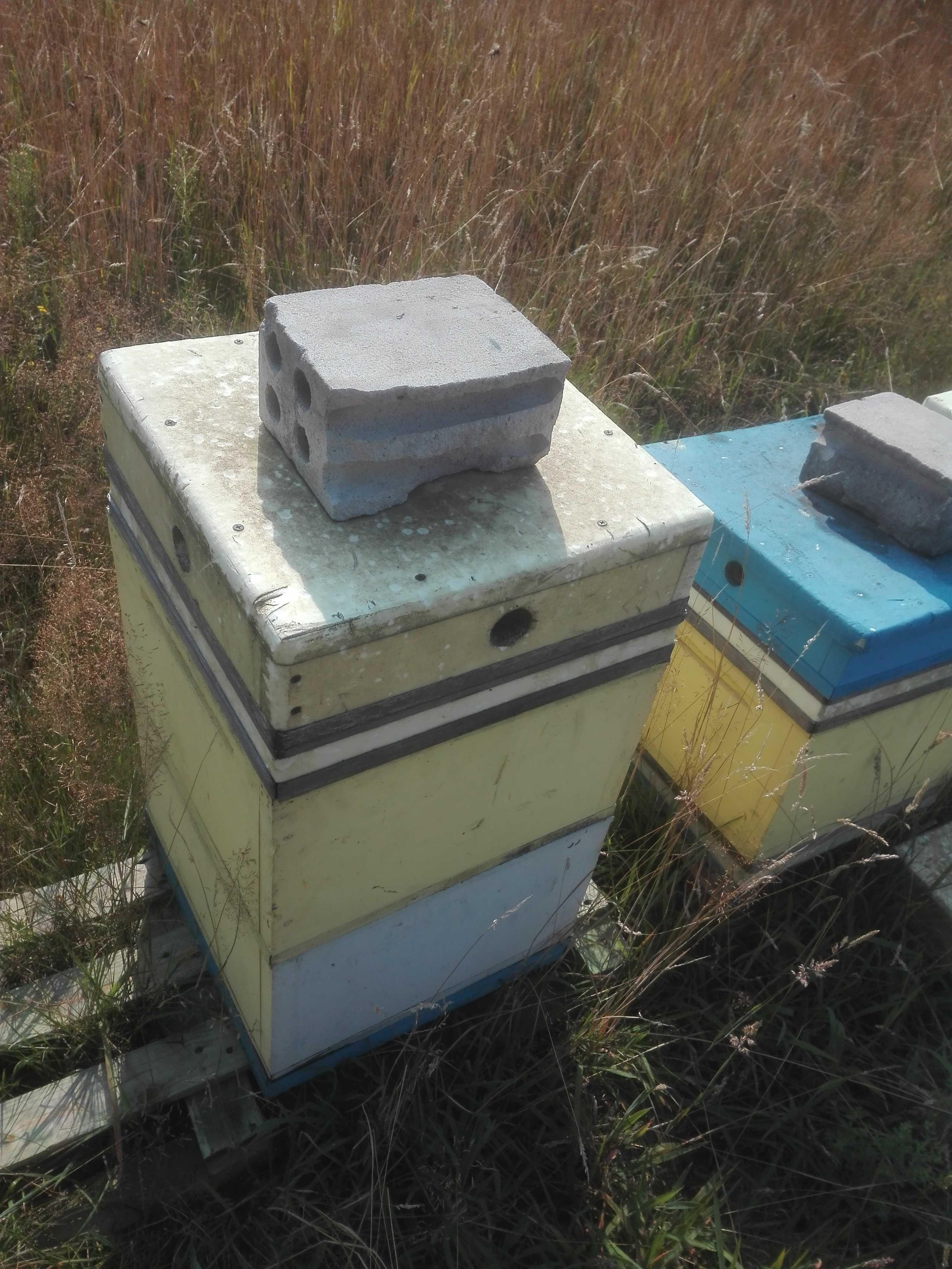 Ule wielkopskie z pszczołami