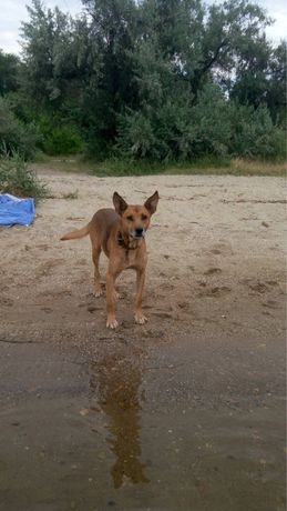Потерялся пес Буццык