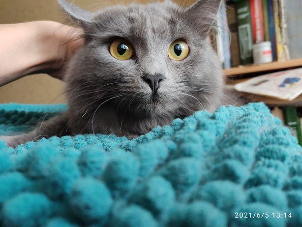 Кошка Дуня в очень хорошую семью