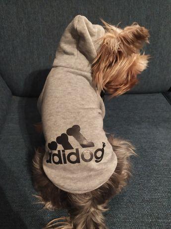 Bluza dla małego psa