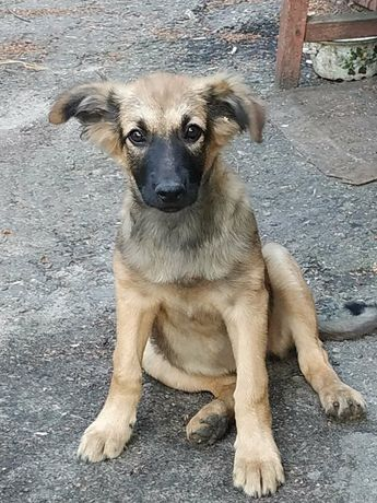 Отдам щенка, девочка,  3 месяца
