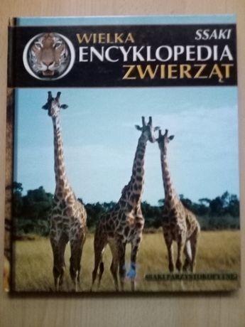 Wielka encyklopedia zwierząt - ssaki parzystokopytne