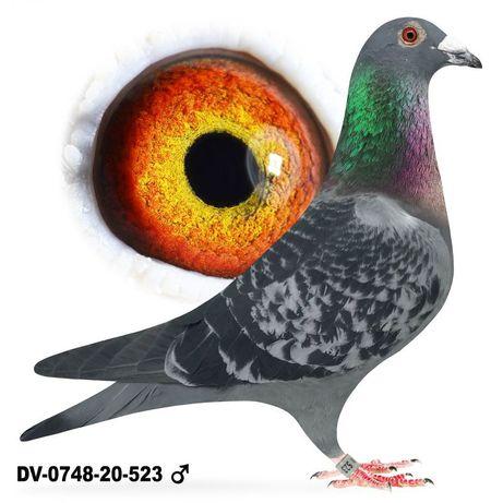 Ptaki i org obrączki Sk-2021 z możliwością zamiany na tipesy