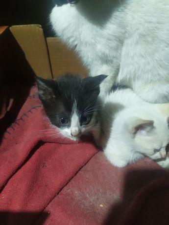 2 gatinhos e 1 gatinha